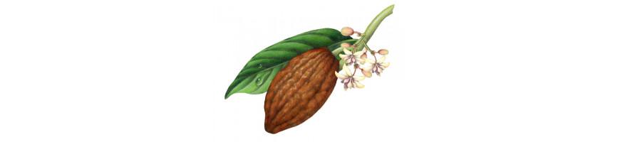 Vente de chocolats (tablette ou poudre) en ligne